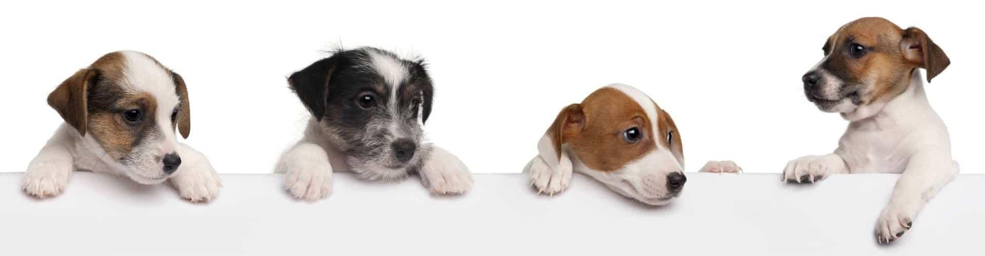 École de dressage à Laval | Centre canin Astuces Canines