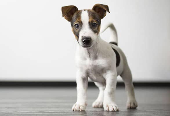 École de dressage pour chiot à Laval | Maternelle | Centre canin Astuces Canines