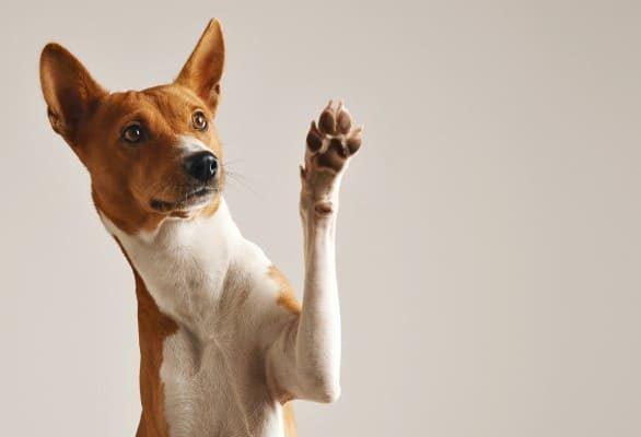 École de dressage pour chien à Laval | Cours de dressage spécialisés | Centre canin Astuces Canines