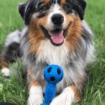 La confusion chez le chien