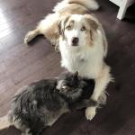Chat tenant patte d'un chien